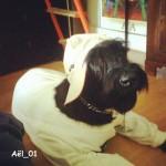 AEL_01