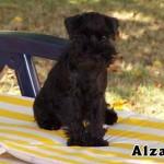Alzane_01
