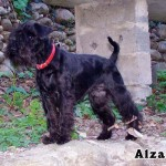 Alzane_02