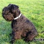 Artheus_02