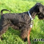 Artheus_03