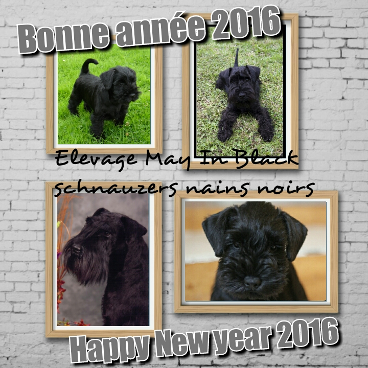 BonneAnnee_2016
