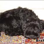 Brahms_01