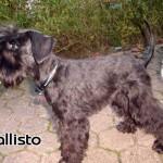 Callisto_01