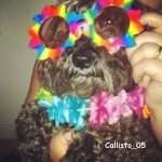 Callisto_05