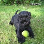 Cooper_01