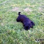 Cynele_03