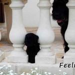 Feeling_01