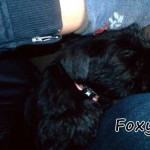 Foxy_02