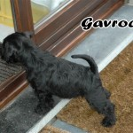 Gavroche_01