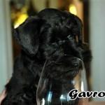 Gavroche_02