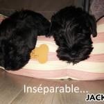 Jack_01