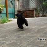 Jessy_02