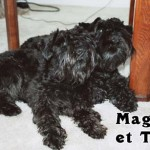 Maggie_02