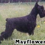 May_04