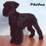 Phebus_01