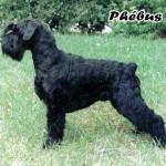 Phebus_02