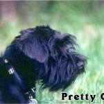 Pretty_01