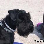 Tara_02