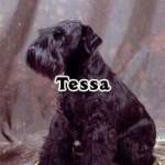 Tessa_04