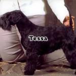 Tessa_05